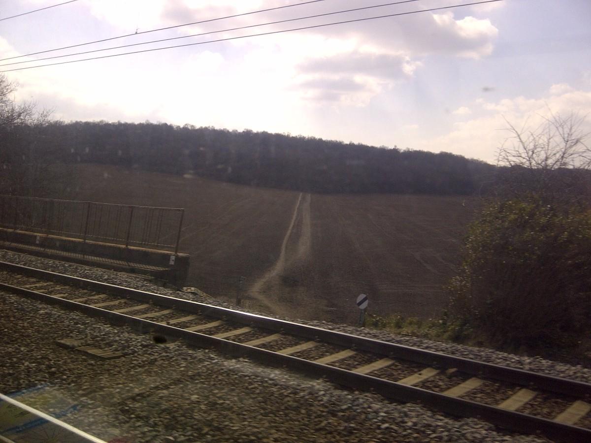 A wood near Stevenage, as seen from a commuter's train