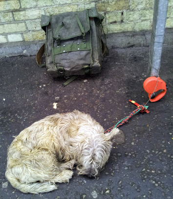 A tired dog at Cambridge station