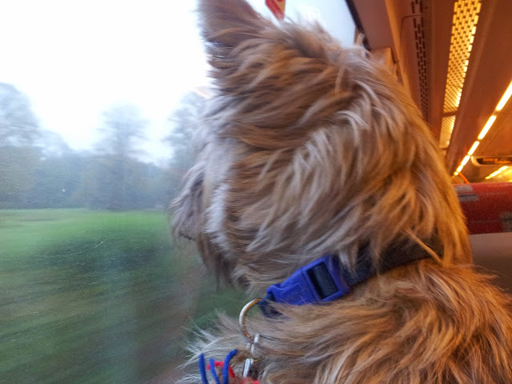 Smithy on the train to Dullingham