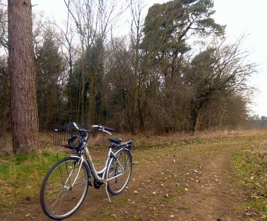 Thetford Forest and bike
