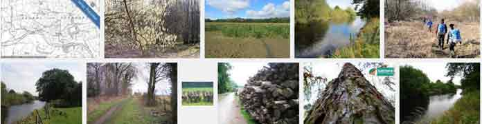 Image search for carthick wood