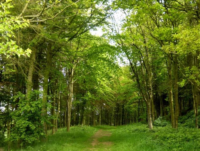 Dalby Hills path