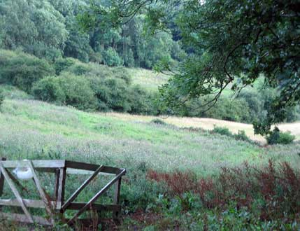 Hillside pasture above Stathern, Leicestershire
