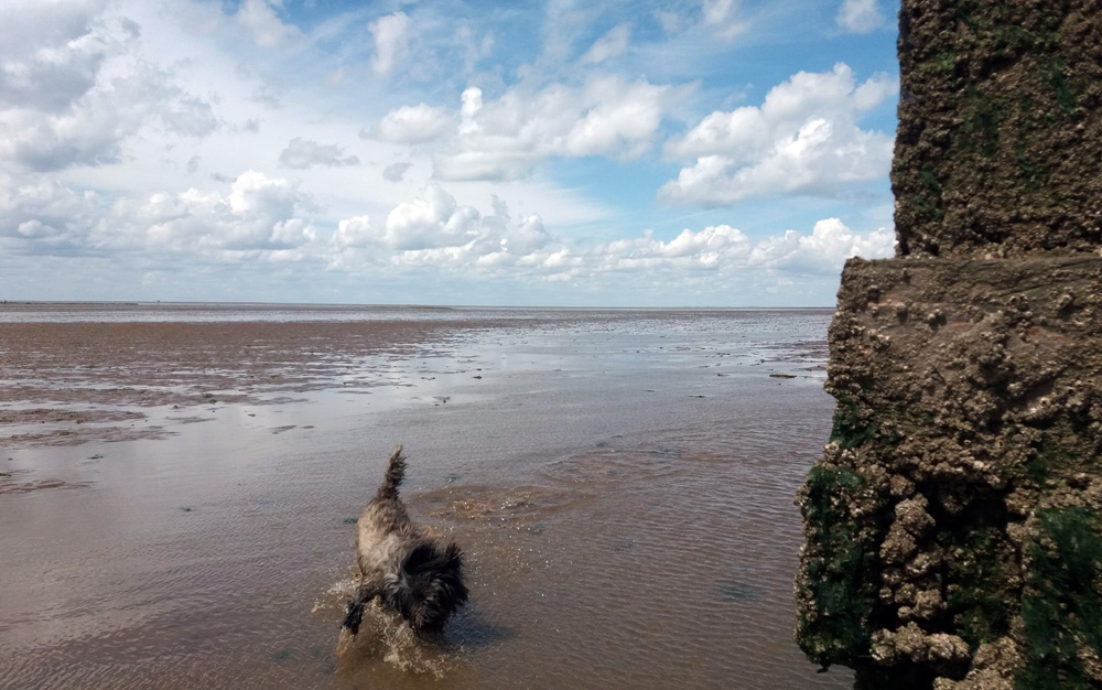 Smithy dog on the mud flats