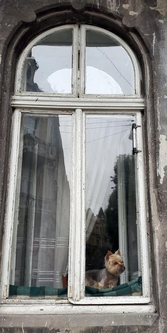 Львівська собака