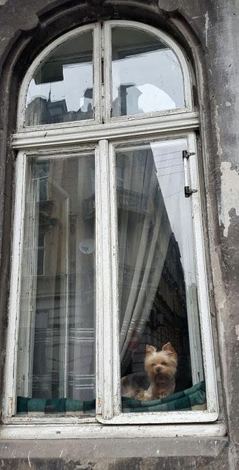 Lviv dog