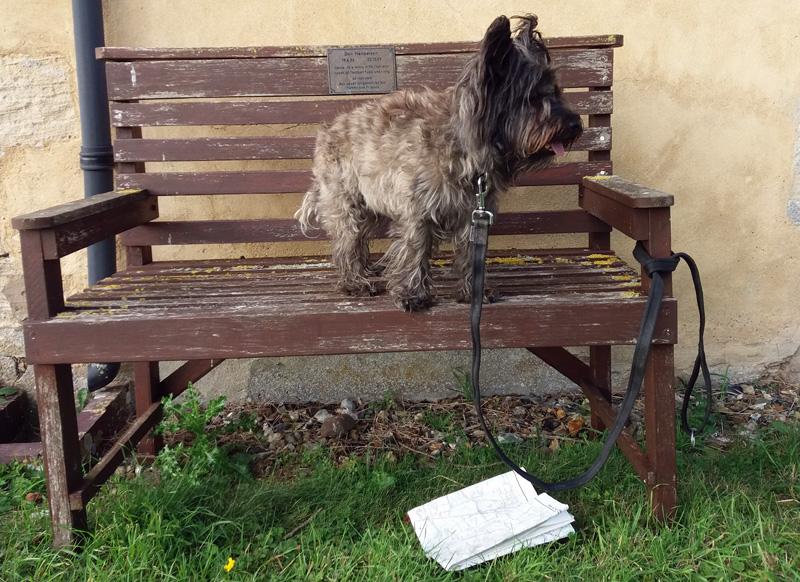 Smithy dog