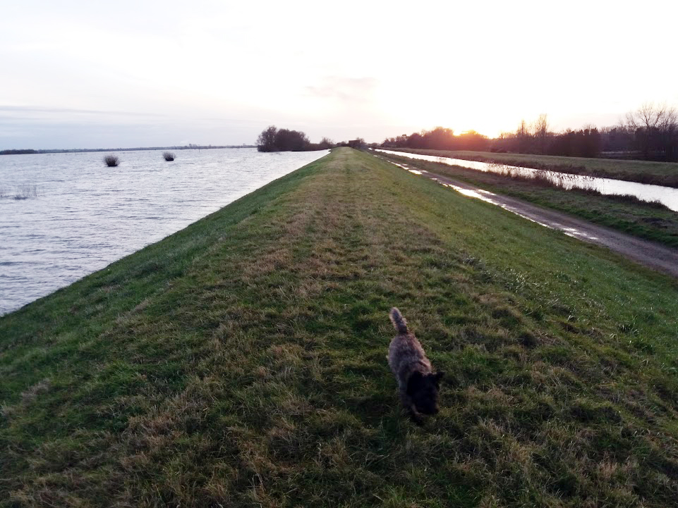 The dog on the bank