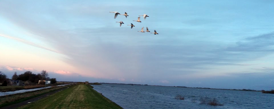 Swan squadron