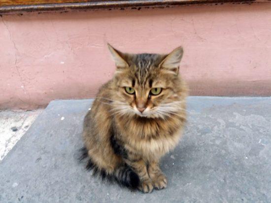 Odesa cat